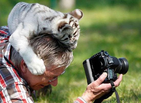 D'autres photographes chanceux... Tigre_10