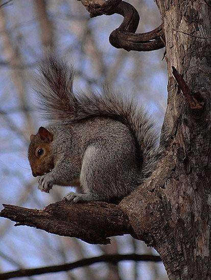 Un petit gris... Ycureu10