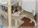 trombinoscope......de nos chiens P007_111