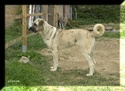 trombinoscope......de nos chiens P007_112