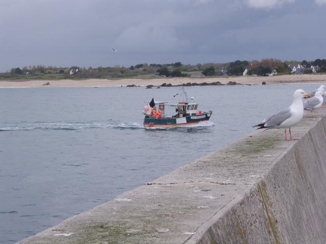 Oiseaux marins Sta50119