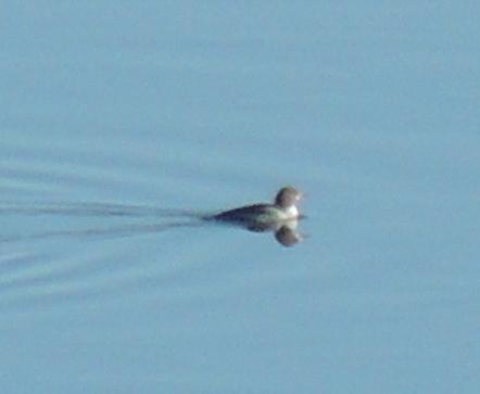 vu sur le fleuve St-Laurent Dscn5411