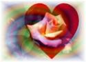 Voici donc comment vous devez prier: Notre Père qui est aux cieux! Que ton nom soit sanctifié Rose_g11
