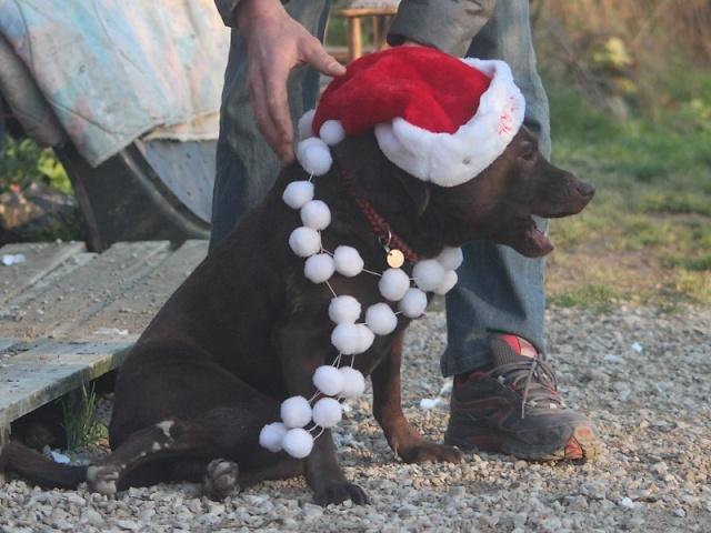 Chocapic de Noël Img_2615