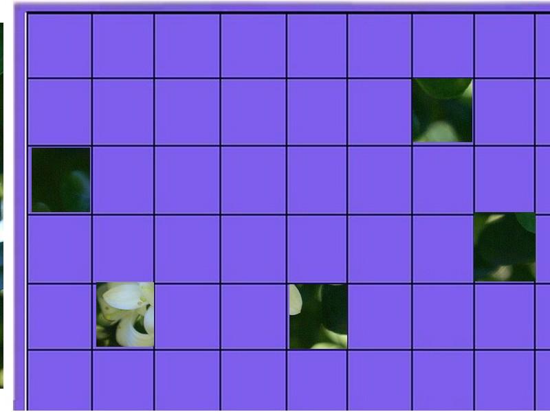 un arbuste - ajonc - 25 décembre trouvé par Pitchoune Un_arb12