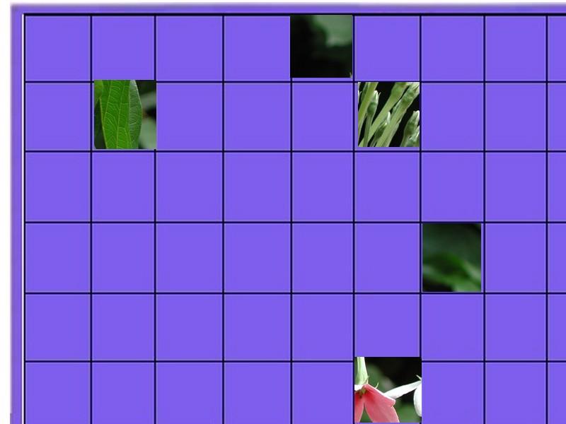 une plante - ajonc -30 décembre trouvée par Sylvie  Une_fl10