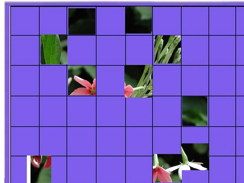 une plante - ajonc -30 décembre trouvée par Sylvie  Une_fl11