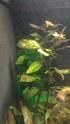 Des algues sur toutes mes plantes 12366610