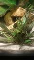 Des algues sur toutes mes plantes 12380210