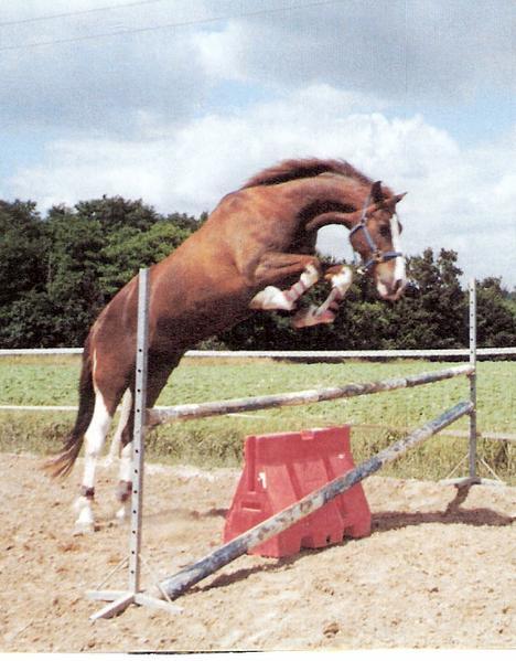 Une cavalière pratiquant, entre autres, l'équitation en amazone Sautli11