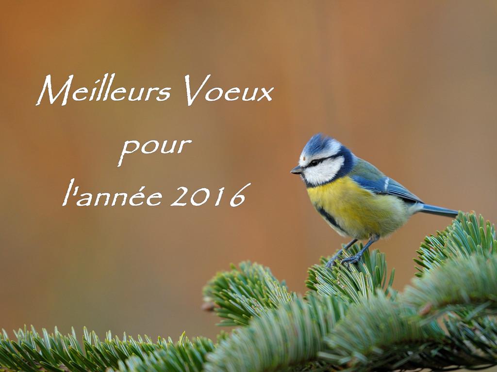 Bonne année 2016 2015-024