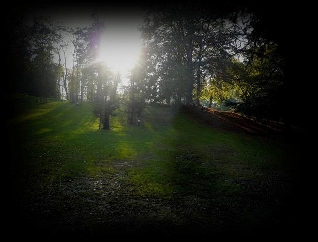 balade dans les bois ... Photo-14