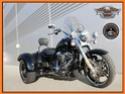 Notre freewheeler 20429710