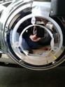 Notre freewheeler 23376110
