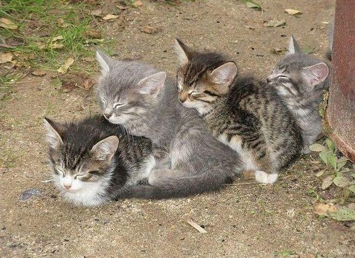 les chats 100-ch10