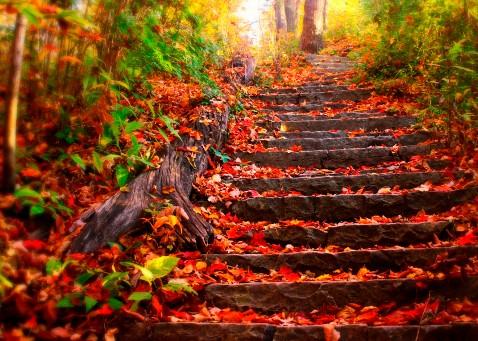 l'automne 20130910