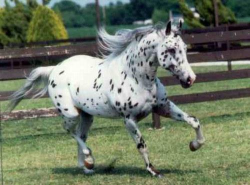 les chevaux  - Page 3 91300_10