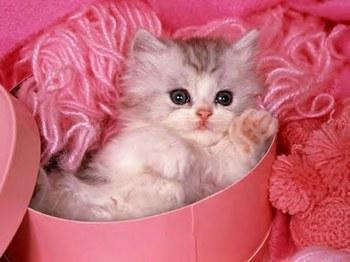les chats Chaton10