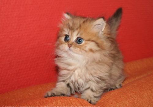 les chats Minou10