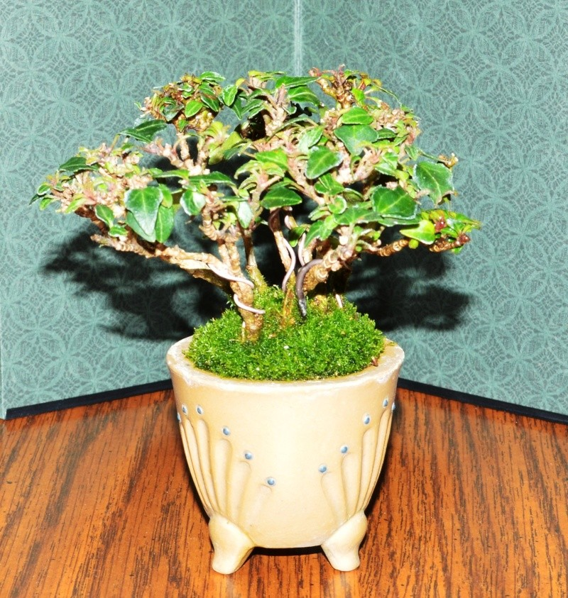 Small ivy accent Ivy_2010