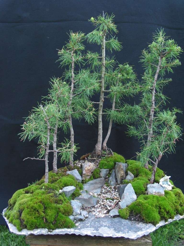 larch group 100-0010