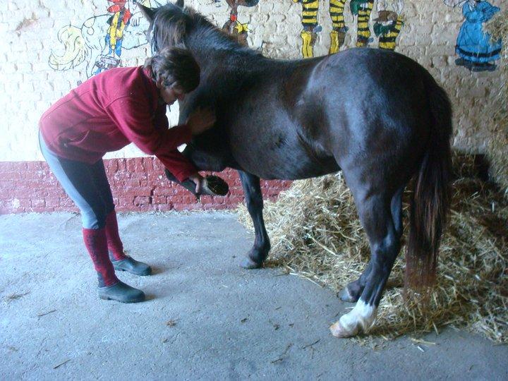 Cassis, ponette , 4  à 5 ans (ADOPTEE) 71872_10