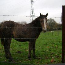 ASTER, poulain (croisé haflinger et poney d'1m40), adopté Dsc03010