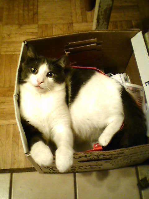 My cat Biddle Biddle12
