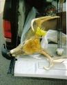 Roadkill's 08 Buck L_a2ba11
