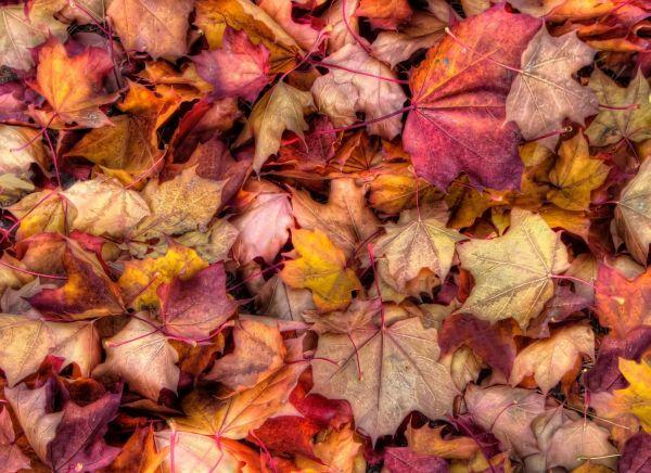 Fall Leaves Leaves16