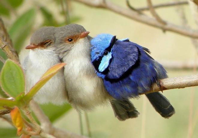 Những chú chim 'kề vai sát cánh' Chim1110