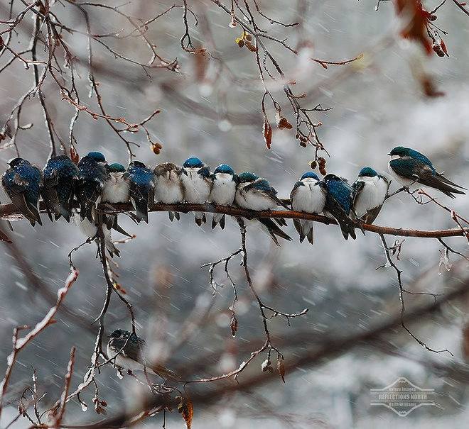 Những chú chim 'kề vai sát cánh' Chim1210