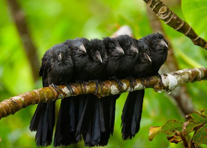 Những chú chim 'kề vai sát cánh' Chim1310