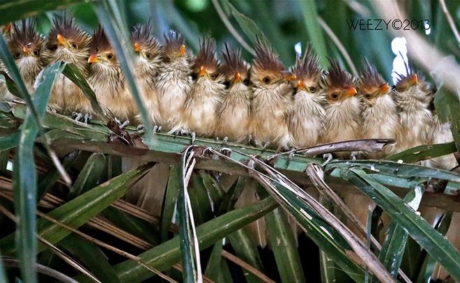 Những chú chim 'kề vai sát cánh' Chim1410
