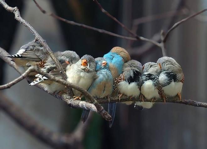 Những chú chim 'kề vai sát cánh' Chim1510