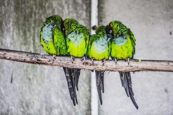 Những chú chim 'kề vai sát cánh' Chim1610