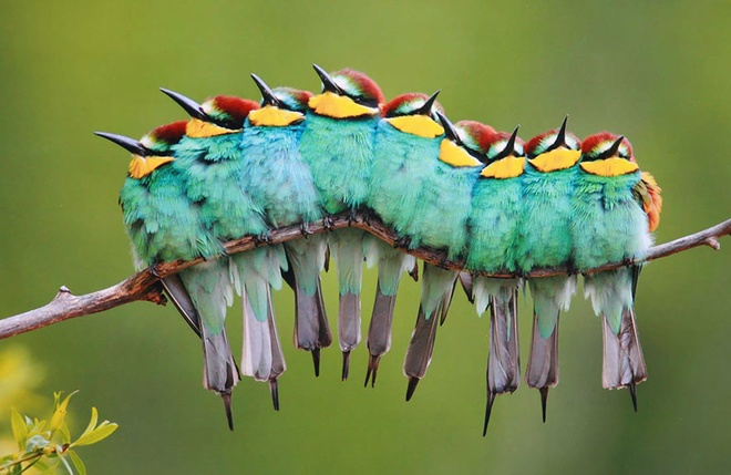 Những chú chim 'kề vai sát cánh' Chim2-10