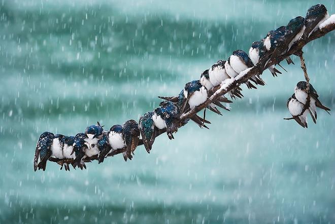 Những chú chim 'kề vai sát cánh' Chim3-10