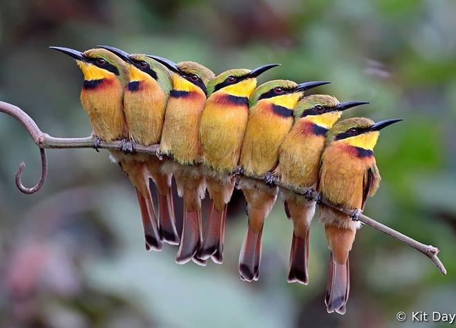 Những chú chim 'kề vai sát cánh' Chim6-10