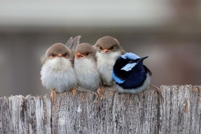 Những chú chim 'kề vai sát cánh' Chim7-10