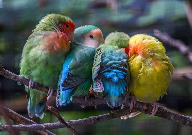 Những chú chim 'kề vai sát cánh' Chim8-10