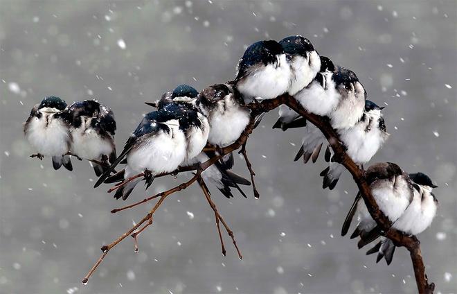 Những chú chim 'kề vai sát cánh' Chim9-10