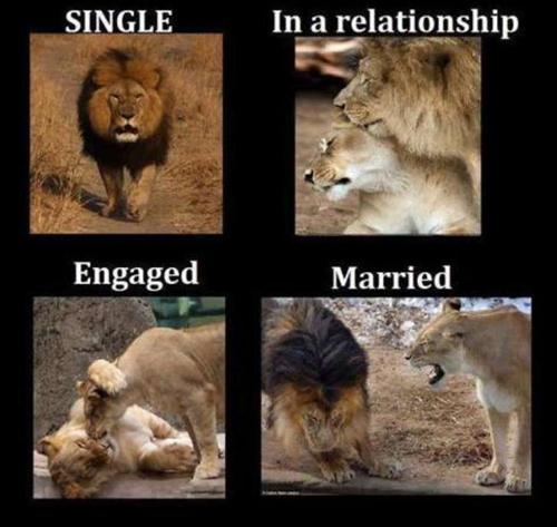 Sự khác biệt giữa người độc thân và đã kết hôn Nguoi-13