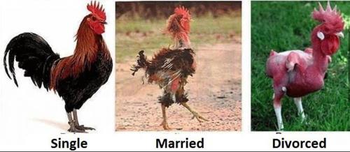 Sự khác biệt giữa người độc thân và đã kết hôn Nguoi-16