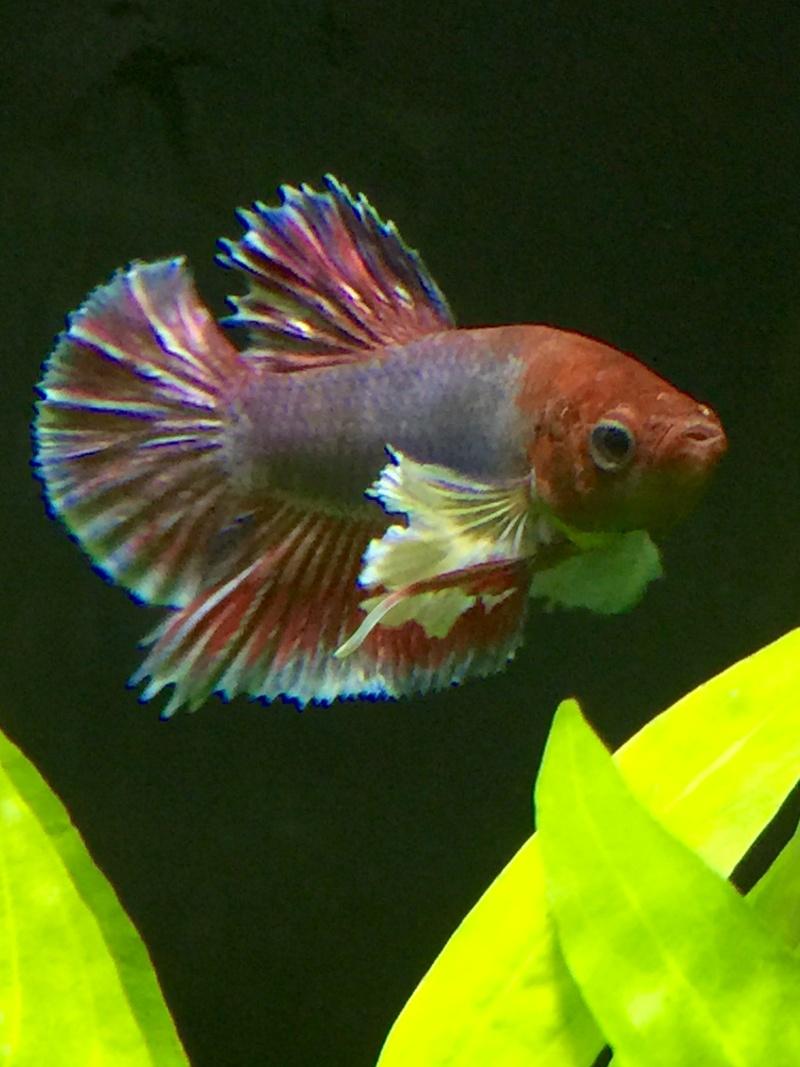 Gus, Mon petit nouveau dumbo  Image36