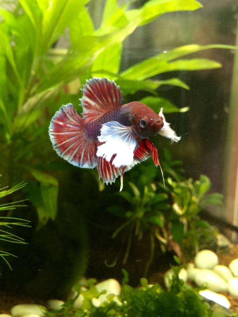 Gus, Mon petit nouveau dumbo  Image42