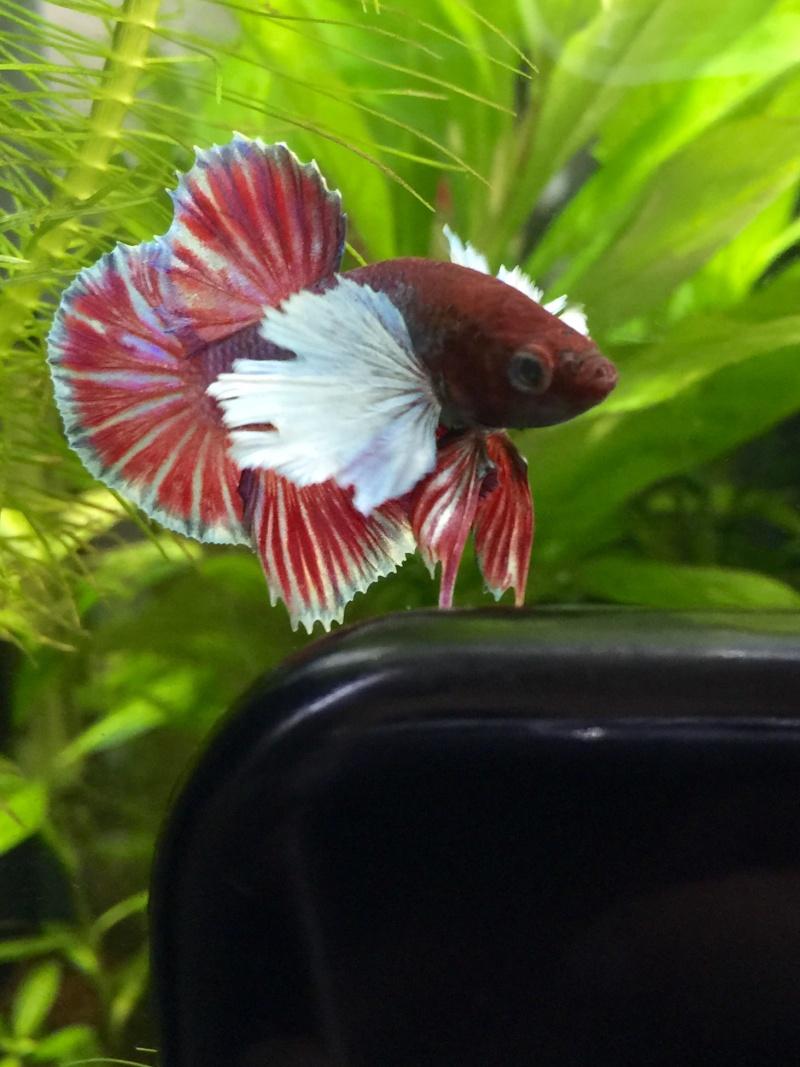 Gus, Mon petit nouveau dumbo  Image44
