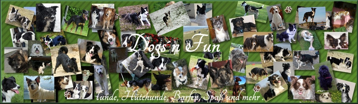Dogs`n Fun Banner12