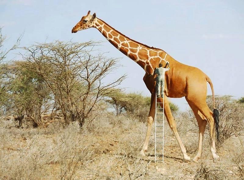 A: Le blues de la girafe Kb28pg10