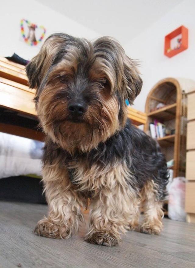 2 chiens trouvés errants non identifiés sur Mitry Mory (77) Youkik10